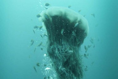 jellyfish_vertical